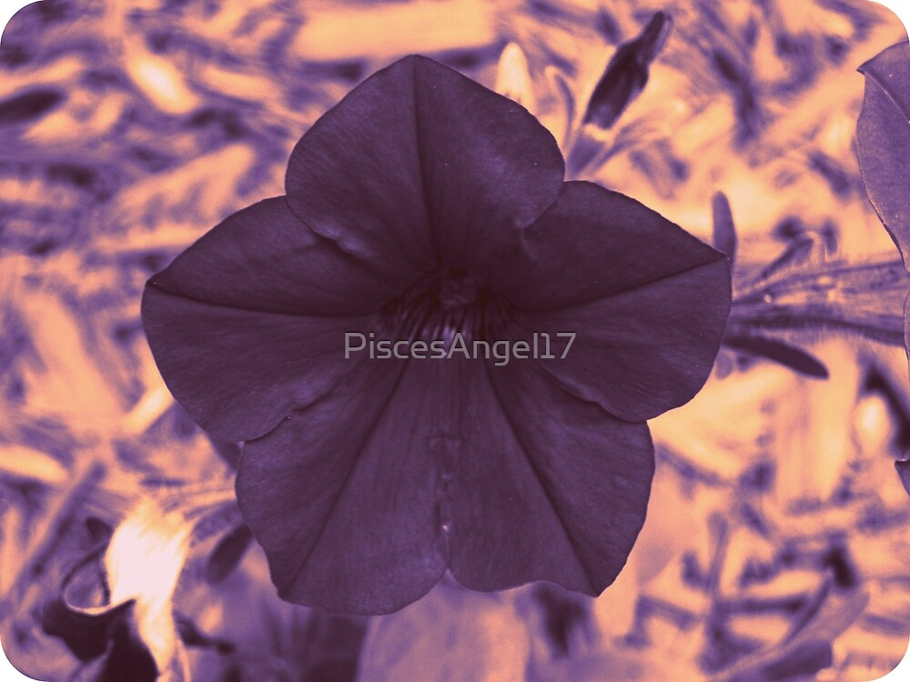 Mysterious Petunia by PiscesAngel17