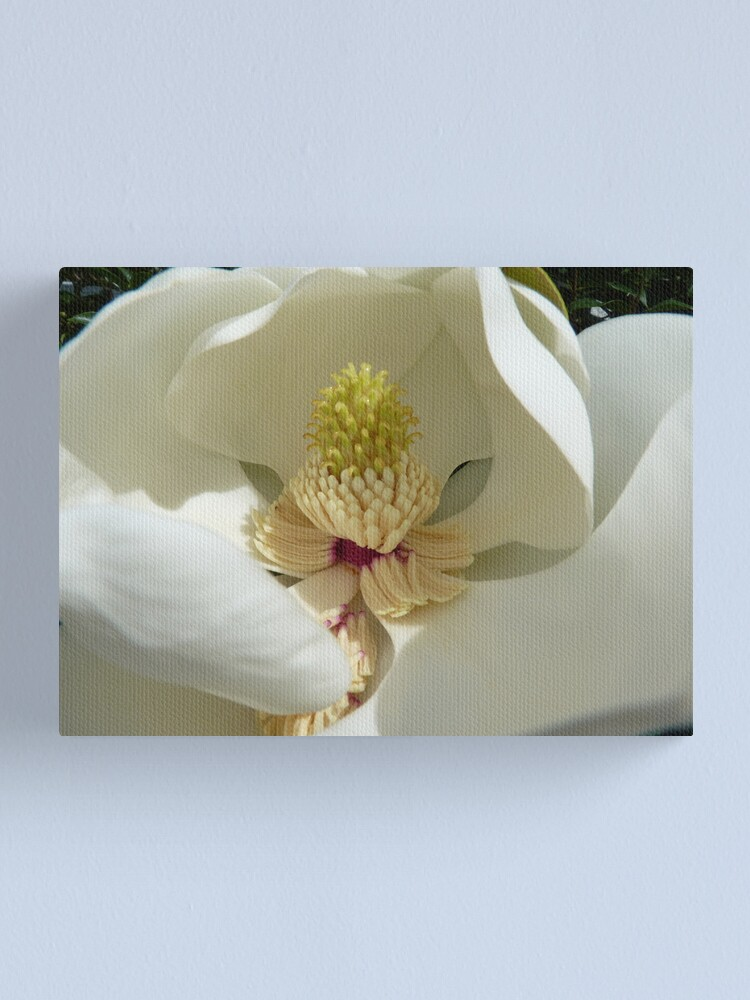 Alternate view of Magnolia Grandiflora Canvas Print