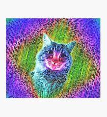 Lámina fotográfica Gatito gatito arco iris gato