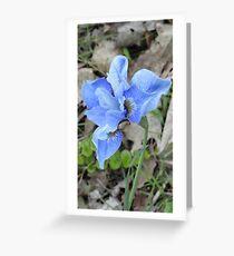 Purple Dutch Iris Greeting Card