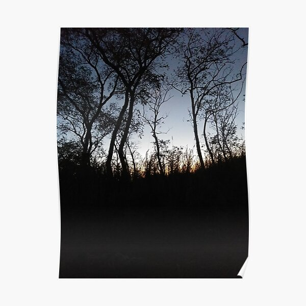 #Sky #Tree #NaturalLandscape #Nature #Branch Natural environment Cloud Wilderness Evening Morning Sunset Night Poster