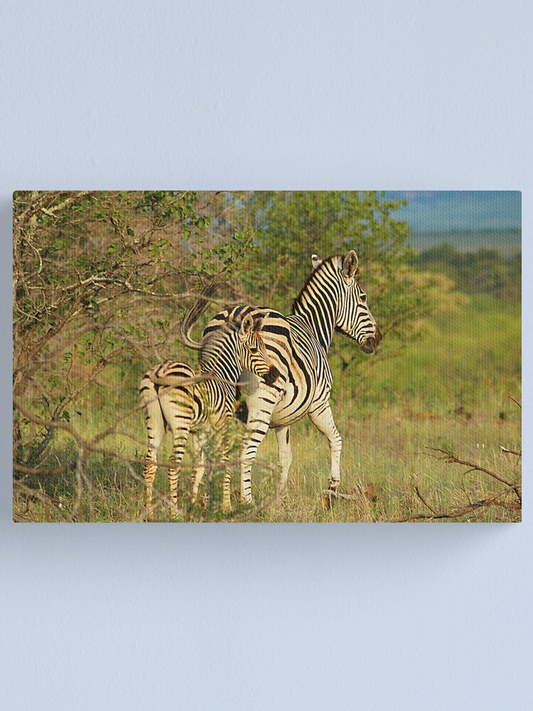 Alternate view of Mom and Baby Zebra Canvas Print