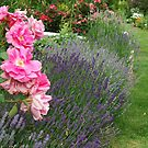 Lavender & Roses by Tracy Riddell