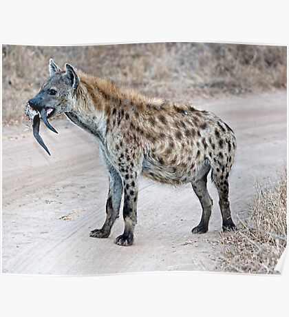 Hyena With Serious Overbite Poster