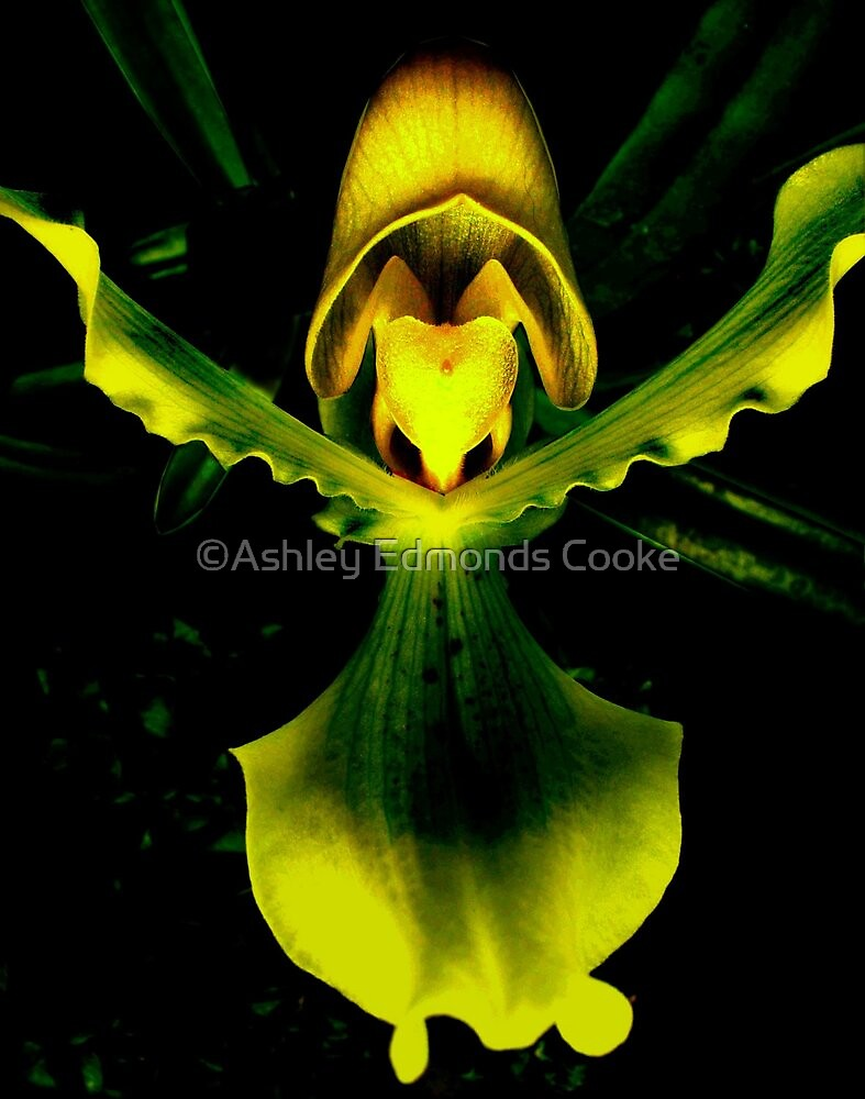 Guarded Heart - A New Perspective on Orchid Life by ©Ashley Edmonds Cooke