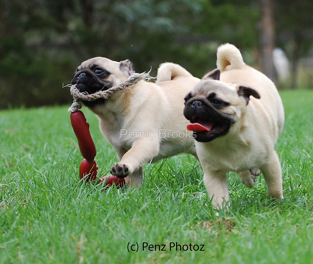 how to play with a pug