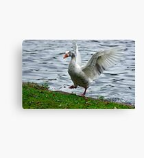 Goose In a Flap Canvas Print