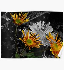 Flowers ~ Selective Coloring Poster