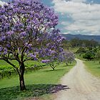 Jacaranda, Gold Coast Hinterland - Australia by fionapine