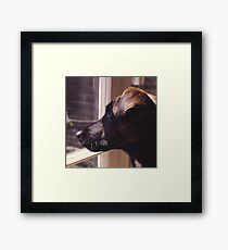 Kippa The Dog Framed Print