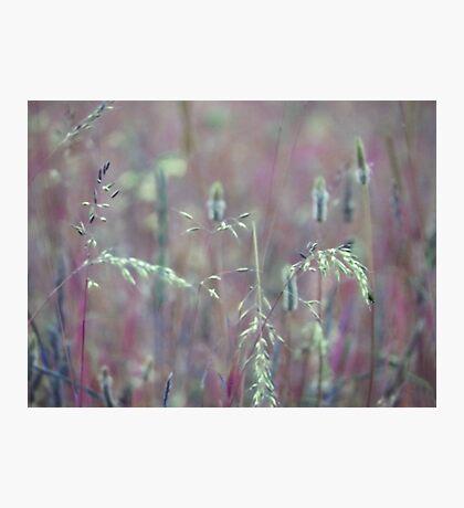 Summer Grass 9 Photographic Print