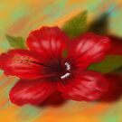 Hibiscus by Soualigua
