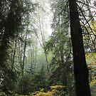 My Vancouver - Robert Charles by RobertCharles