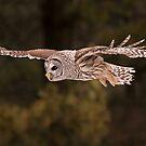 Barred Flying  by Gary Fairhead