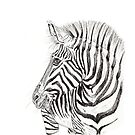 Zebra by Meaghan Roberts