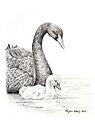 Black Swan & Cygnet by Meaghan Roberts