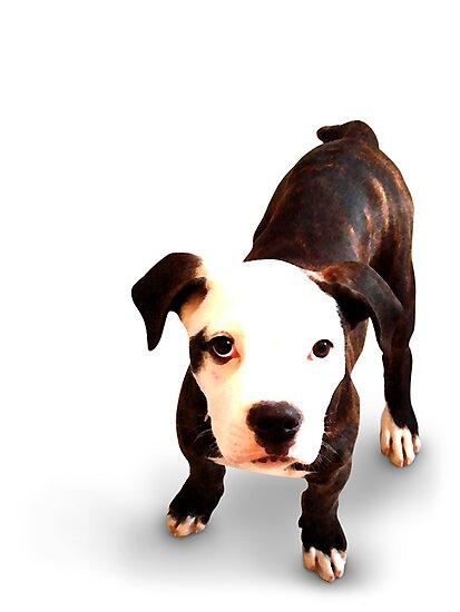 Brindle Bull Terrier Puppy by Michael Tompsett