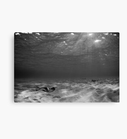 Ray in B&W Canvas Print