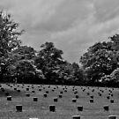 The Forgotten Ones (original photo b/w) by Scott Mitchell