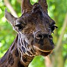 I've always looked up to giraffes... by HelenBeresford