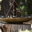 Keeping Cool - Magpie Springs - Adelaide Hills Wine Region - Fleurieu Peninsula - South Australia by MagpieSprings