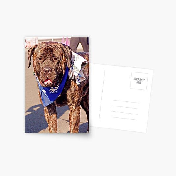 Dog Card Postcard