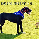 The big and the small of it is... by JuliaKHarwood