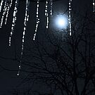 Happy New Year, Blue Moon by MarjorieB