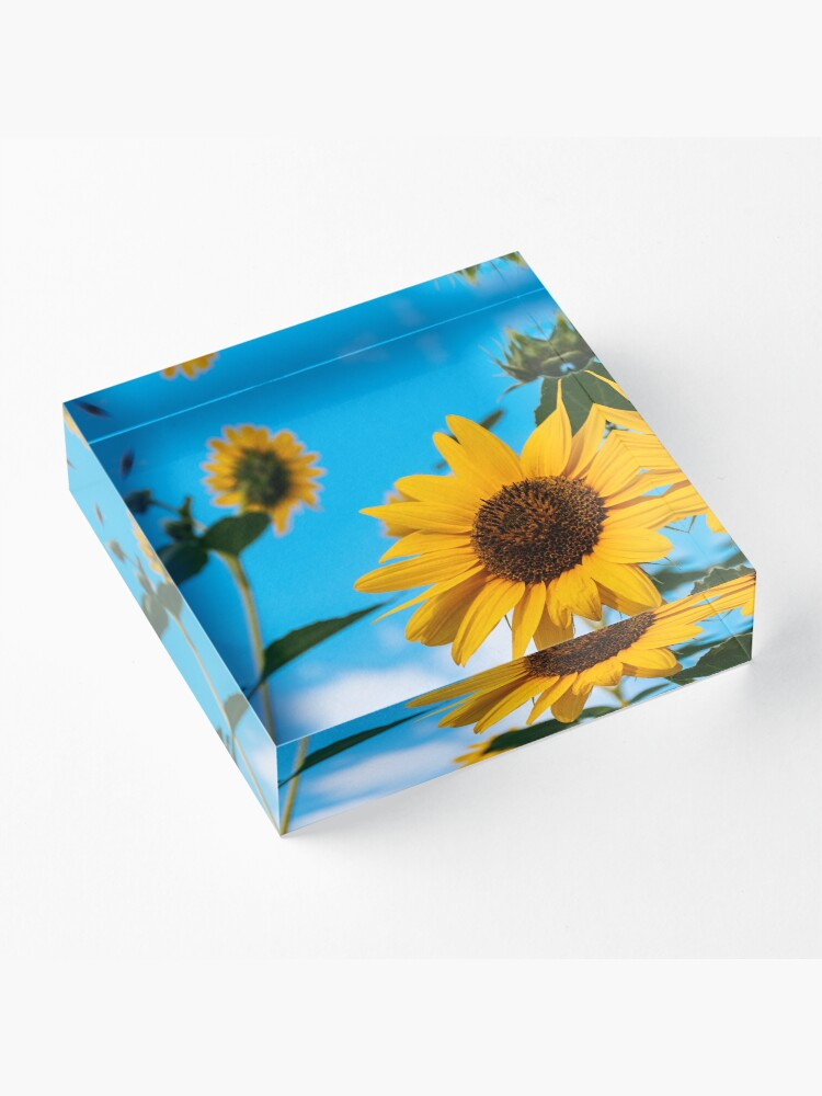 Alternate view of Sunflower and blue sky Acrylic Block
