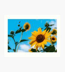 Sunflower and blue sky Art Print
