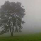 Maleny mists - Sunshine coast hinterland by Tony Middleton