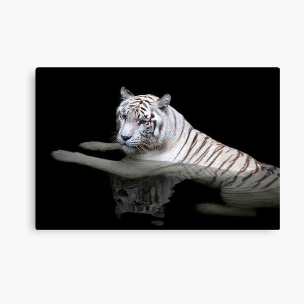 White Tiger, Singapore Zoo Canvas Print