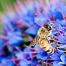 Bizzy Bee by Nicole Pearce