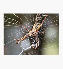 Spider Underbelly Photographic Print