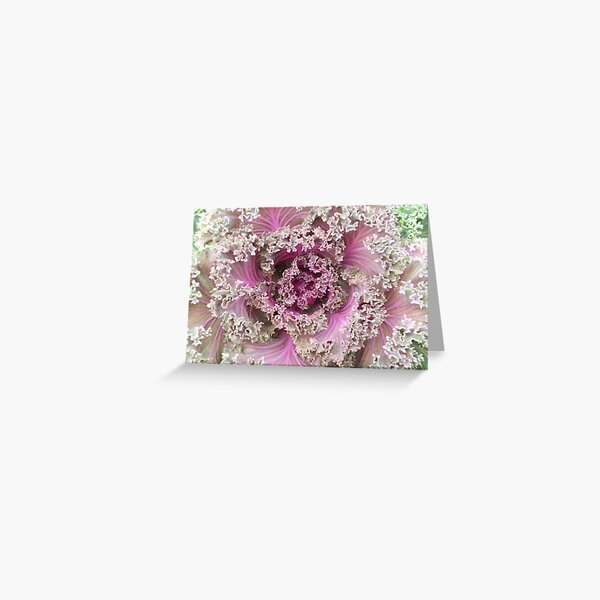 Frilly Ornamental Cabbage Greeting Card