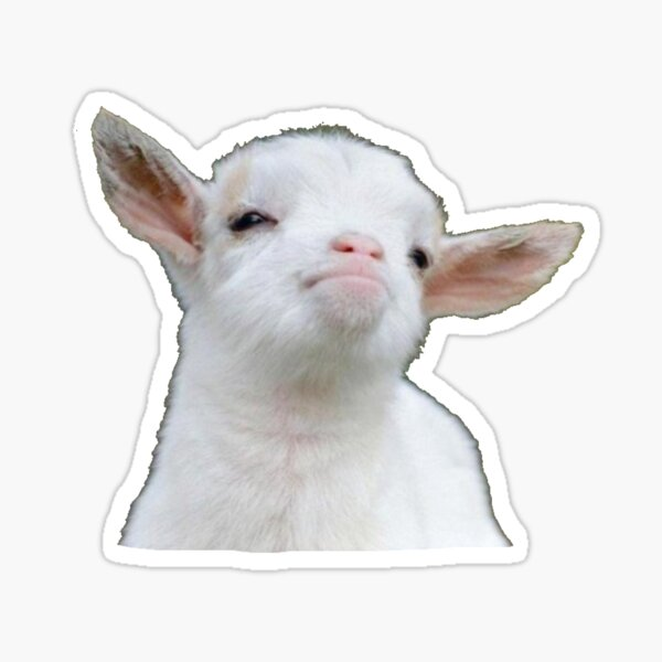 Cute baby goat Sticker