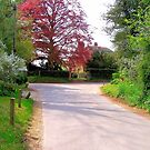 Shaw's Corner, Ayot St Lawrence, Hertfordshire by Paul Dominic Gray
