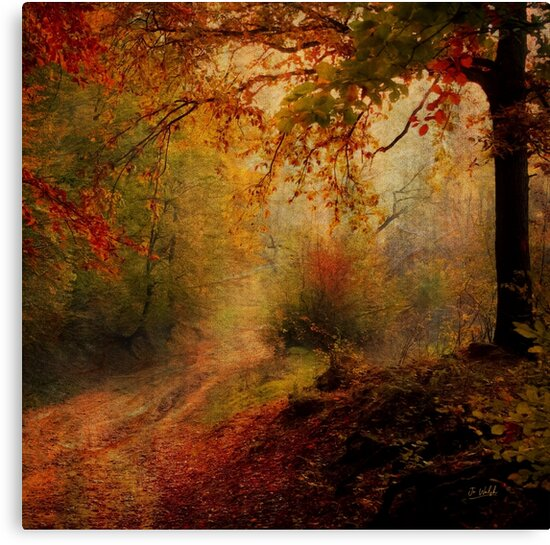 Into the forest by Jo Walsh