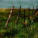 never keep a woman fenced in... that's how storms are formed... by Jenny Miller