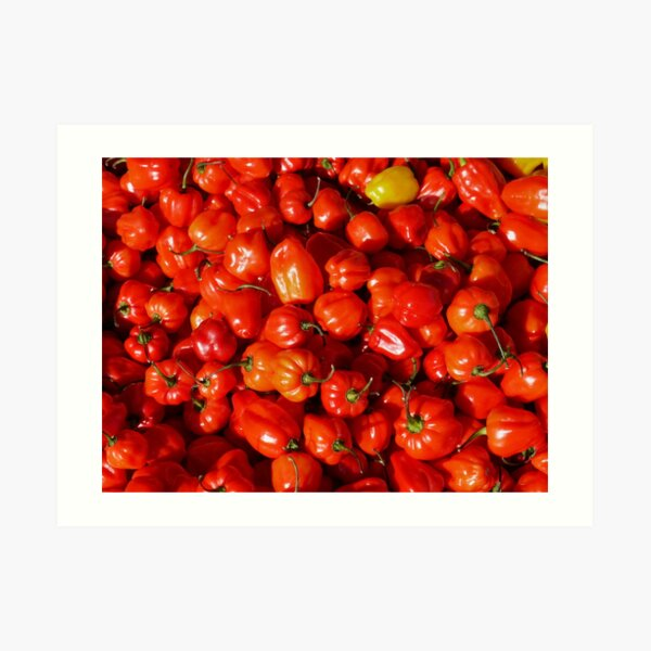 Food - small red peppers Art Print