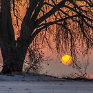 Sunrise Sun Tree by Gregory J Summers