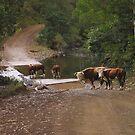 Little run road by jimi9
