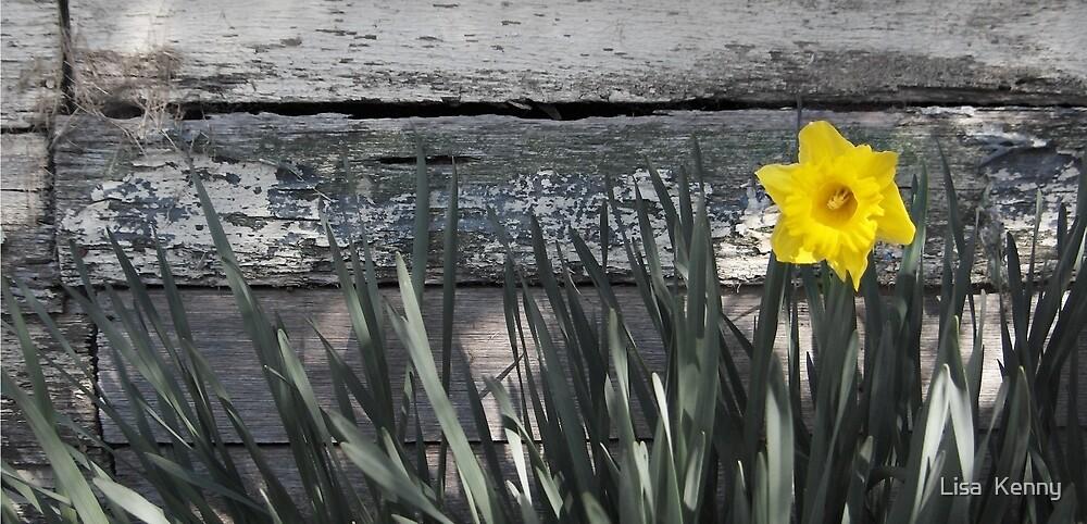 Daffodil by Lisa Kenny