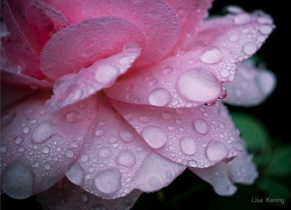 raindrops on pink by Lisa Kenny