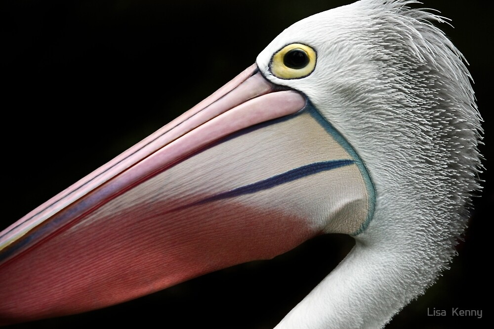 A Pelican Portrait by Lisa Kenny