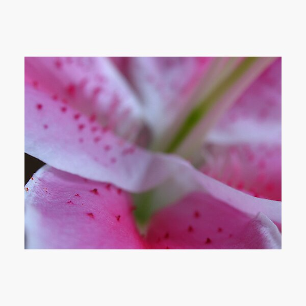 I September Lily Photographic Print