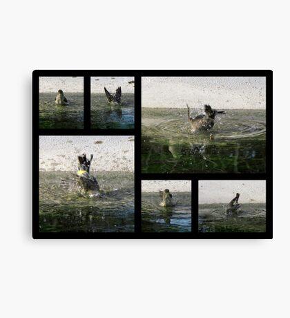 Yellow-rumped Warbler ~ ♫Splish-Splash, I am taking a Bath♫ Canvas Print