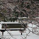Winter Bench by LizzieMorrison
