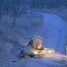 """Road Warrior (formerly """"Where is the Lion?"""") by leystan"""