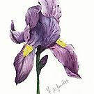 Iris by Martina Fagan